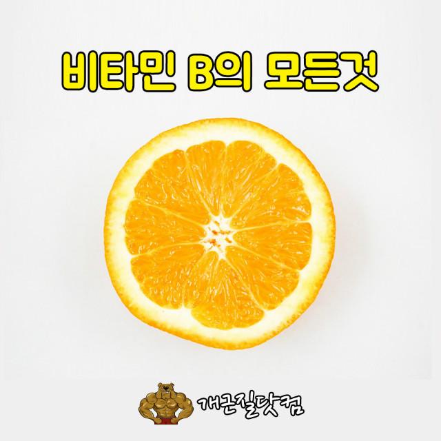 비타민B개근질0.jpg