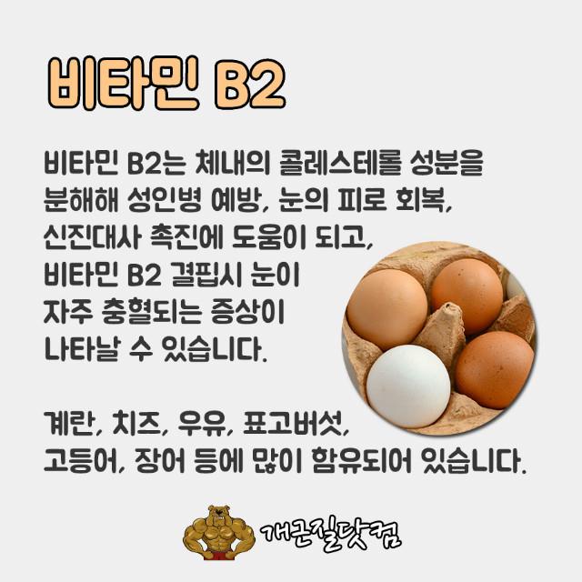 비타민B개근질2.jpg
